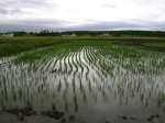 Growth in the Eastern Paddy