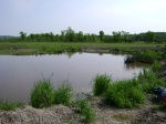 Pond Level 5/28 3